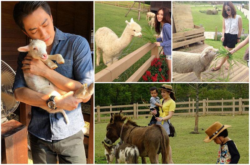 1-6-feed-animals-via-filmrattapoomm,-nukkieme,-Somsiryn,-Nattara_k
