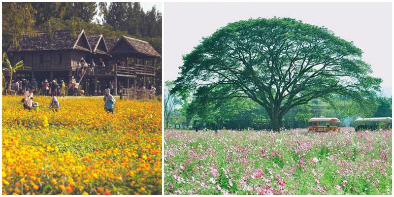 3-a-flower-field-via-_xxi.mui.xxi_,-karataekid