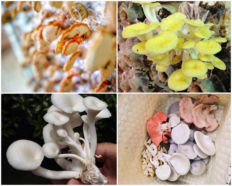 3-c-mushroom-collage