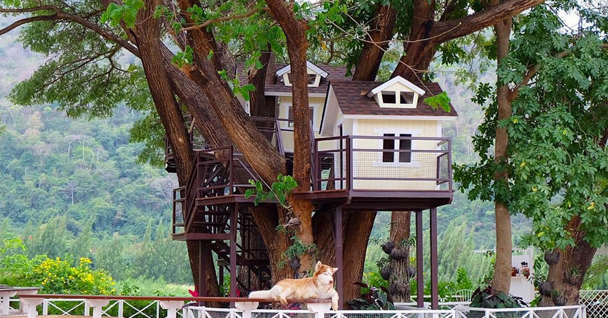 15 unique cafes/restaurants in Khao Yai & Pak Chong you must visit on house bill of lading sample, house cl, house na, house sp,