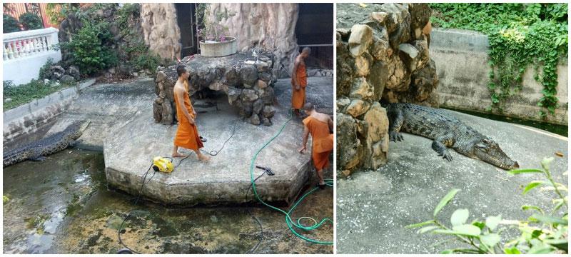 10-Wat-Chakrawat---crocodiles---via-Inazuma,-kyrkylixa