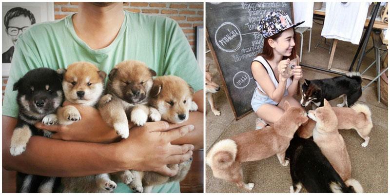 11-a-dogs-via-Bummiidarling,-junjaan