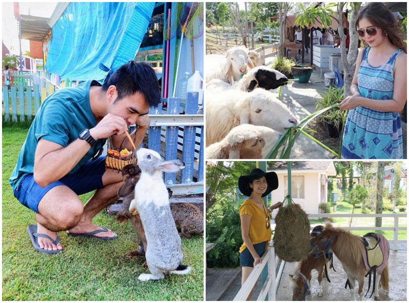 13-farm-via-piassie,-ploy_areenard,-Wiwatchai_knot