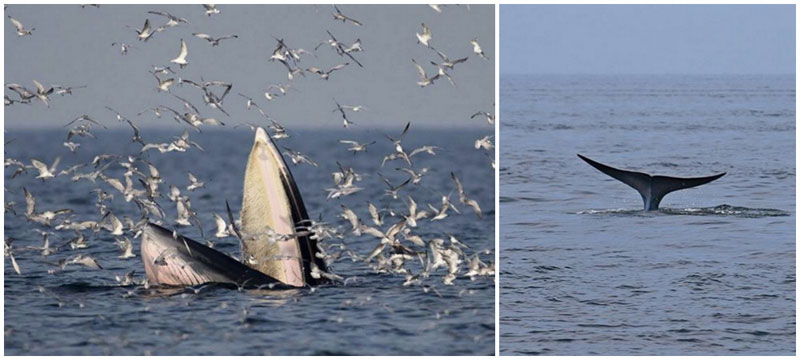 18-whale-via-bangkokpostnews,-pongsthorn.r