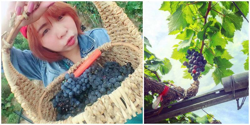 2-grape-via-youzi3,-jiiehuii