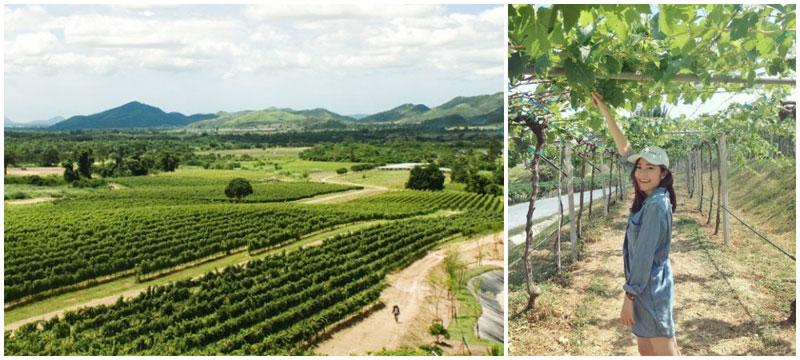 2-vineyard-via-january_pv,-cosmintudoran