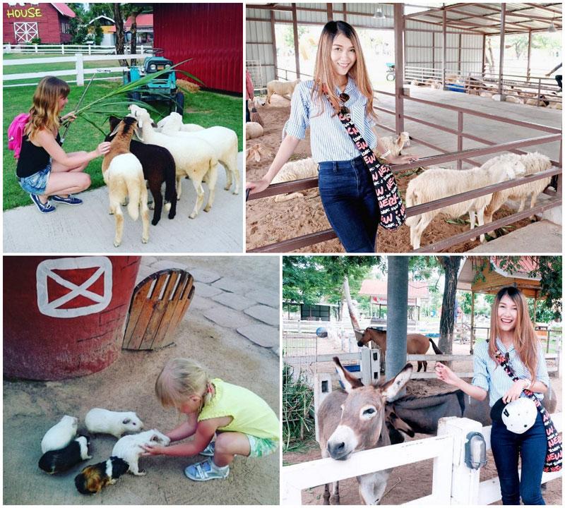 6-donkey-via-muaun.k,-tatiana_permyakova