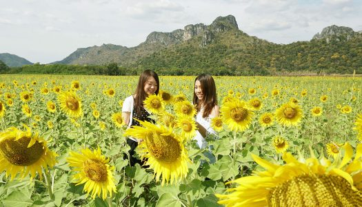10 Tips for all travellers dreaming of going to Khao Yai!