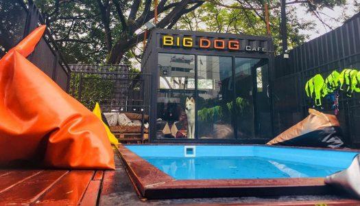 9 cuddly reasons to visit Big Dog Cafe Bangkok: Meet rare huge doggies like Chow Chow, Alaskan Malamute and more!