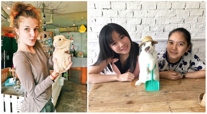10 Animal Cafes In Bangkok With Meerkats Raccoons Fennec Foxes And Other Animals